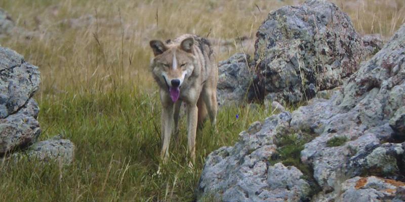 专访《狼图腾》航拍团队——揭秘气势恢宏的航拍镜头